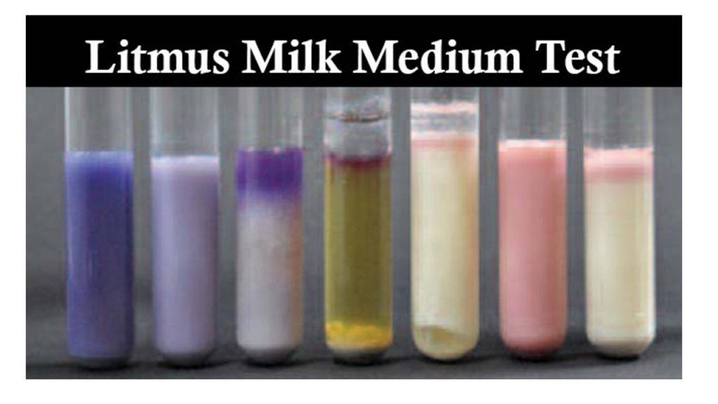 Litmus Milk Test: Introduction, Principle, Composition, Preparation, Procedure, Result Interprettation, Uses and Keynotes